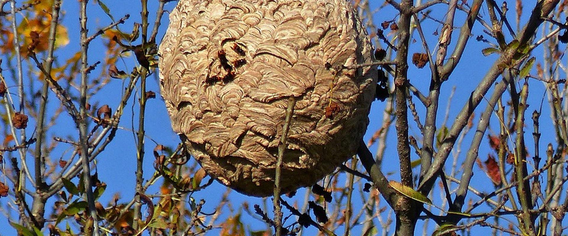 entreprise nid de frelons