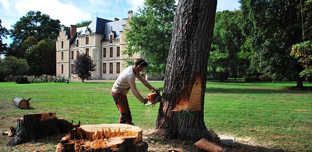 abattage arbre nevers