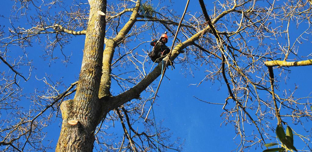 élagage arbre nevers Nièvre